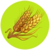 Genome Wheat